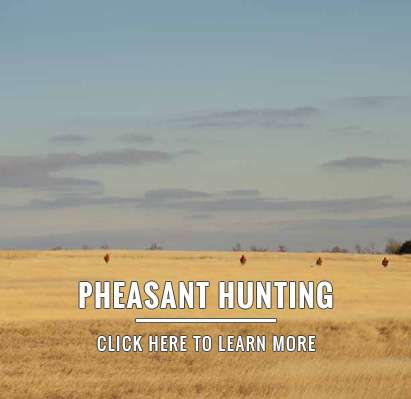 Wingshooting - South Dakota Pheasant Hunting