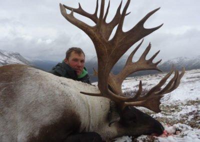 mountain caribou 3