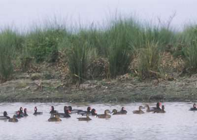hosted hunts waterfowl