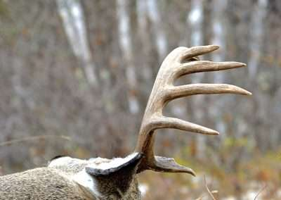 Saskatchewan Whitetail Hunting