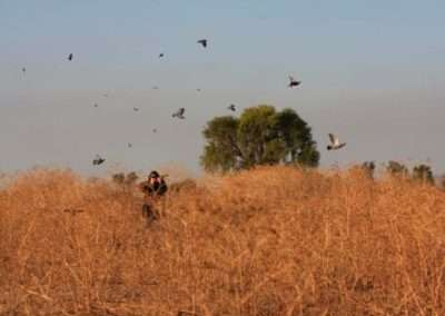 Dove Hunt Argentina 2012 image 2