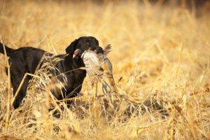 thunderstik lodge pheasant hunt