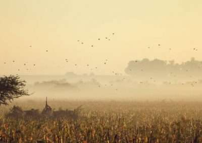 Argentina Dove Hunting 1