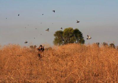 Argentina Dove Hunting 5