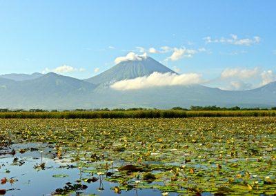 Nicaragua Duck Hunting