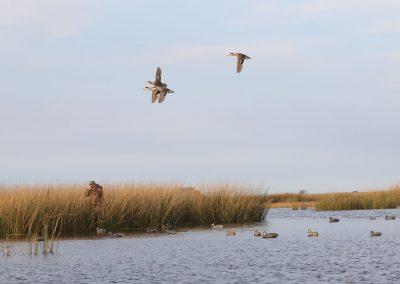 duck hunt 08