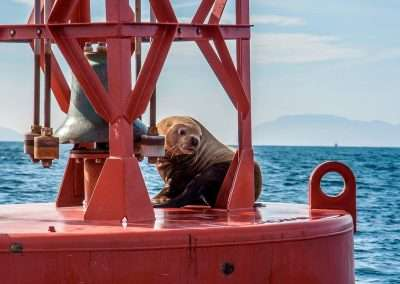lone-seal-sits-on-buoy