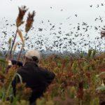 Argentina dove hunting kits