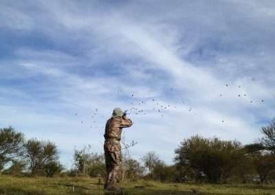 AR dove hunting 5