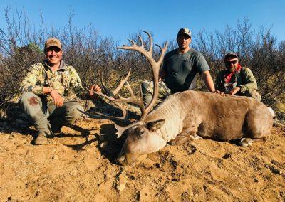 Canadian Moose & Caribou Hunt