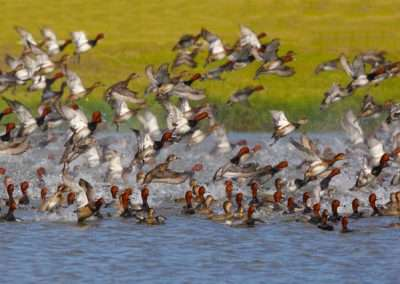 Waterfowl hunting mexico