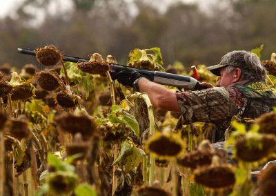 bolivia dove hunting