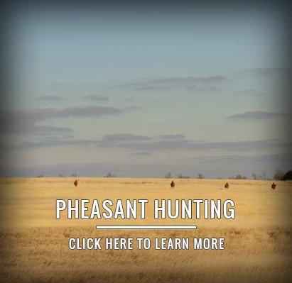 Wingshooting - South Dakota Pheasant Hunting