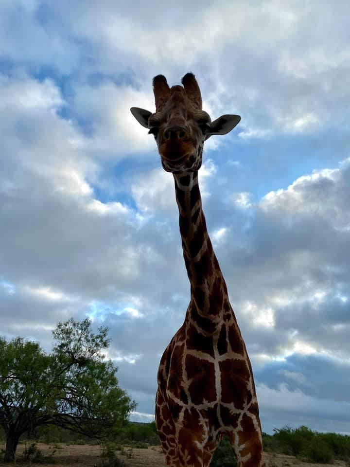Texas Safari Vacation