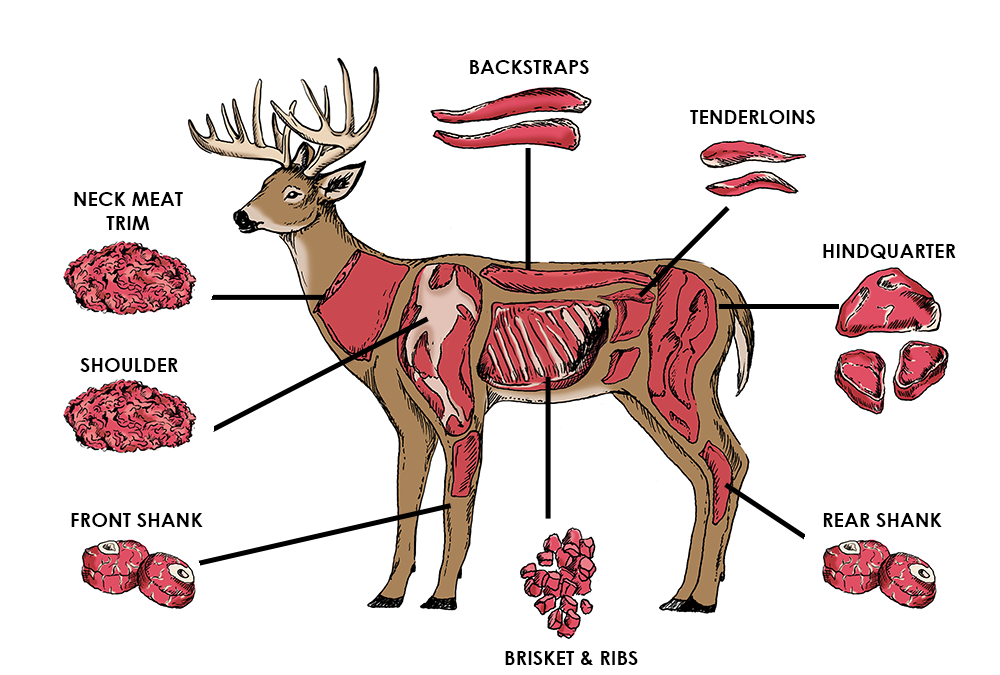 What a Deer/Elk Harvest can put into your freezer and more!