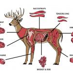 Deer meat chart