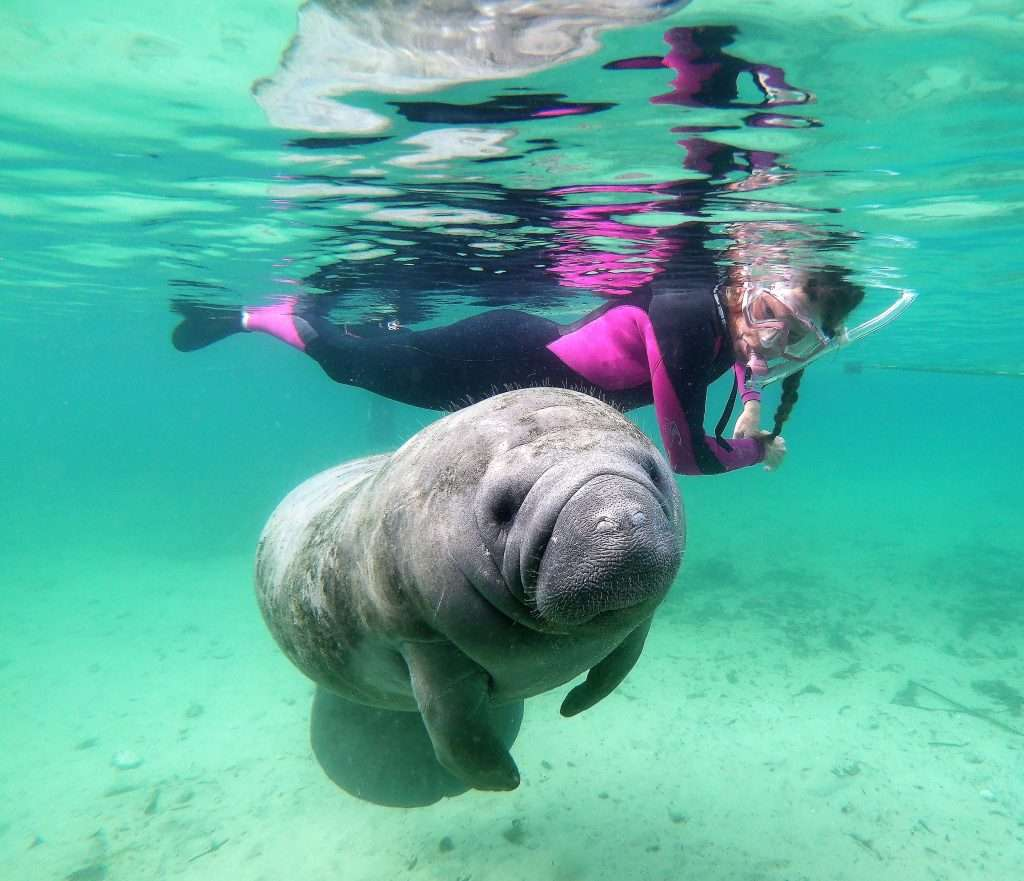 Swim with Manatees Adventure