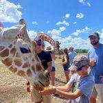 African safari 2021