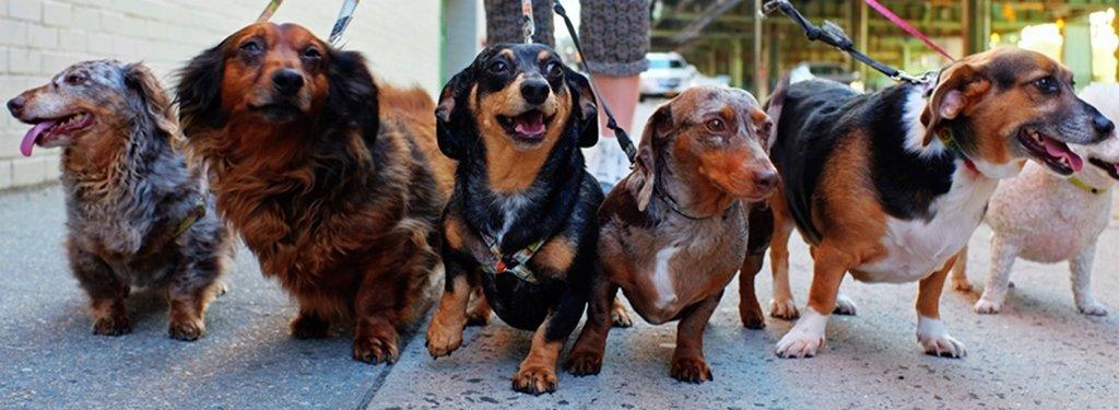 Raw Dog Food Diet from RAW WILD