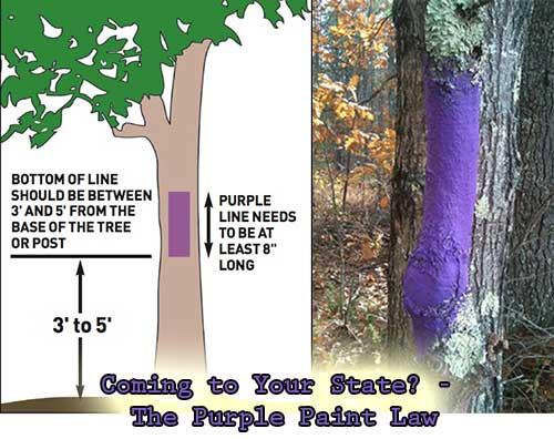 Purple paint law