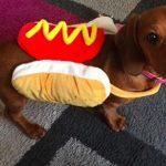 Pup in Bun costume
